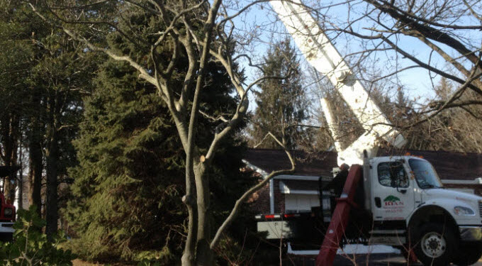 Ryan Tree & Landscaping | Equipment Pic 1 - Crane
