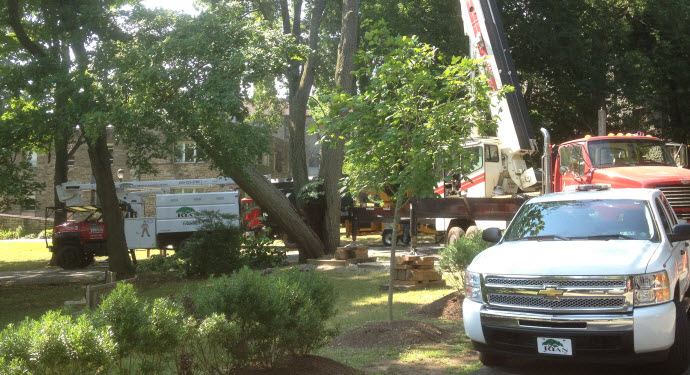 Ryan Tree & Landscaping | Equipment Pic 8 - Trucks
