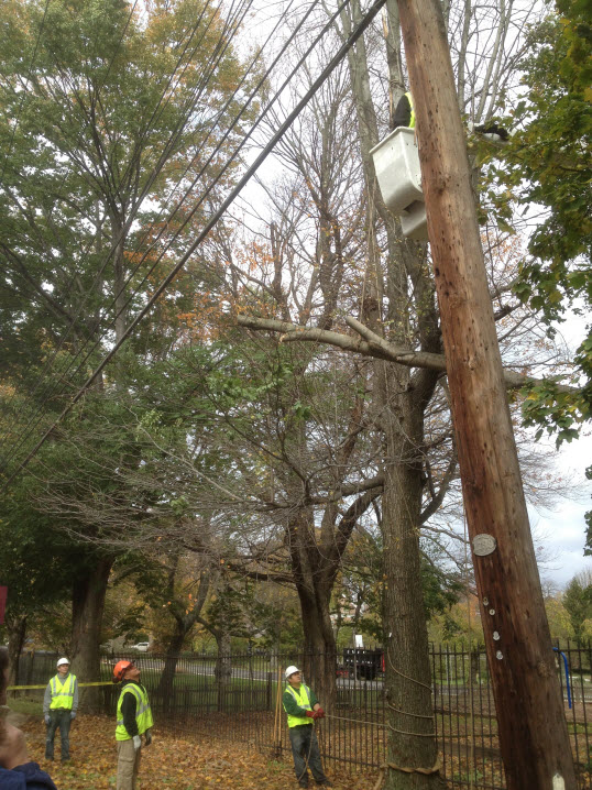 Ryan Tree & Landscaping | Tree Inspection Pic 1